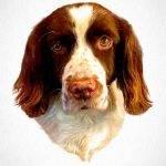 English Springer Spaniel - pawesome art