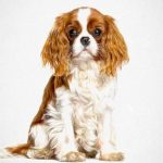 cavalier king charles spaniel - pawesome art